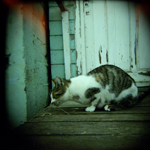 Cat through a Holga