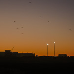 Dawn | 03/07/2011