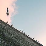 Seagulls | 25/12/2014