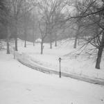 Central Park | 22/03/2015