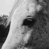 White horse | 11/05/2015