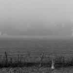 Fog | 04/09/2018