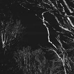 Bosque de Arrayanes | 21/03/2021